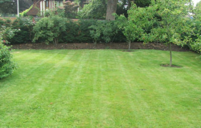 Lawn Care & Grass Cutting