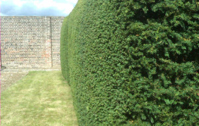 Hedge & Large Shrub Care